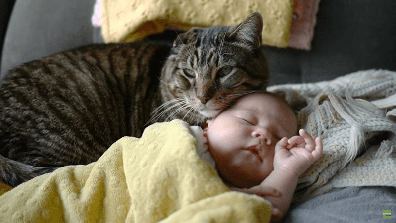 cats as babysitters