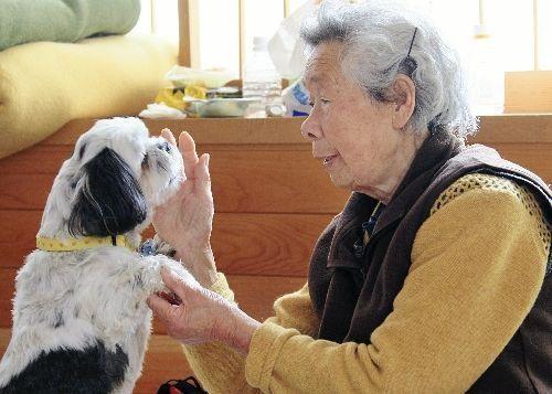 2011 Sendai earthquake doggeh Japan shih tzu - 4598867712
