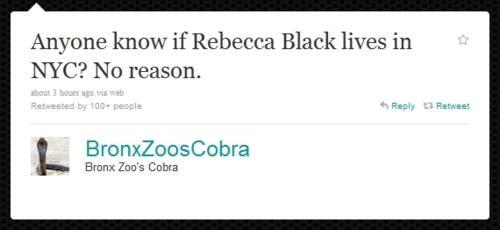 Bronx Zoo,Cobra-tini,Egyptian Cobra,twitter