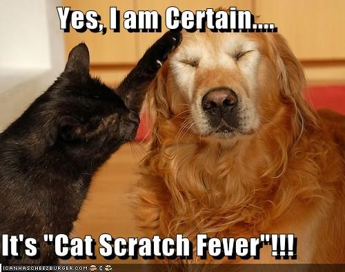 cat,cat scratch fever,certain,diagnosis,golden retriever,pun,scratch