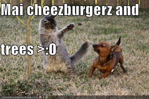 Cheezburger Image 4599440896