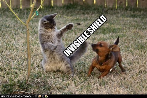 barrier,cat,dachshund,divider,division,fighting,invisible,shield