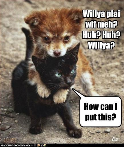 answer asking do want kitten play puppy question rejection upset whatbreed - 4599688448