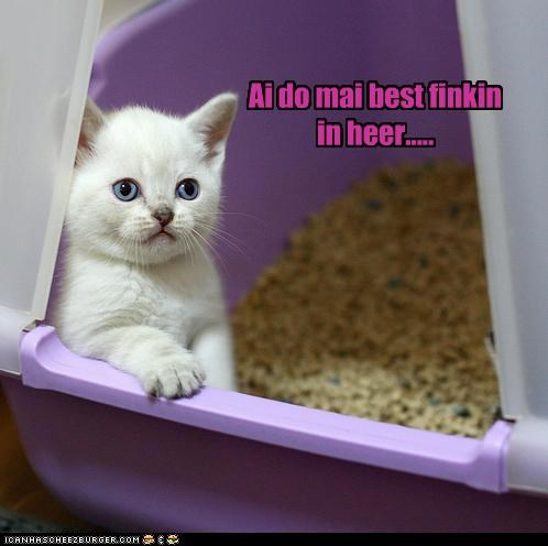 best caption captioned cat explanation here kitten litter box location reason thinking - 4599776000