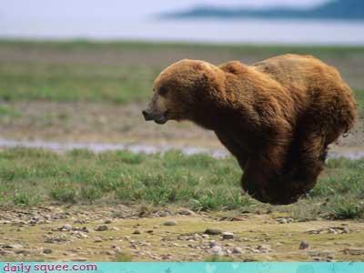 acting like animals batman bear floating hoverbear hovering illusion lyrics running song Theme Song - 4599991296