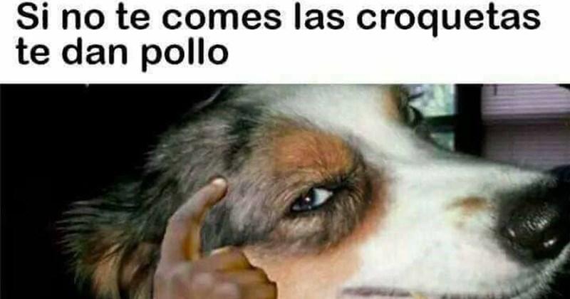 memes perros inteligentes