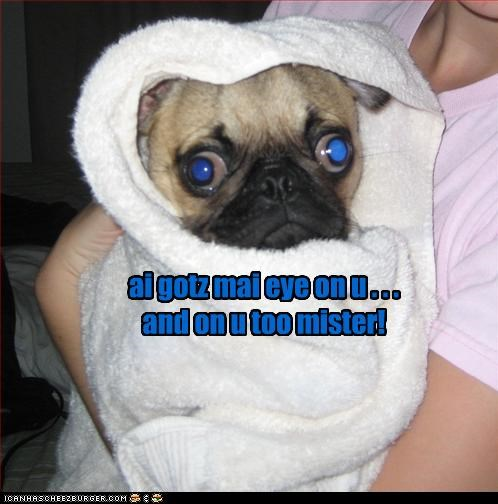 cross eyed eye got pug towel wrapped up you you too