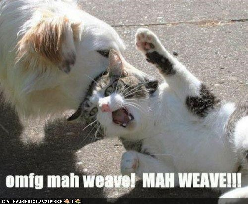 attack,best of the week,caption,captioned,dogs,fight,hair,Hall of Fame,oh girl,weave