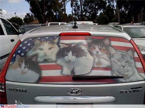 america cars Cats korea political pictures - 4602258688