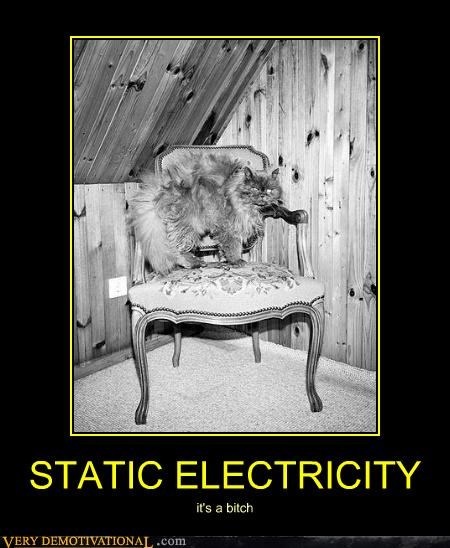 cat chair static electricity