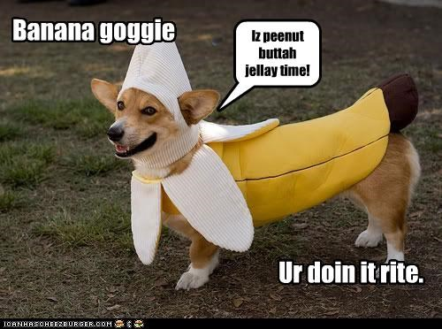 banana best of the week corgi costume doing it right dressed up family guy Hall of Fame i has a hotdog jelly joke peanut butter time - 4602422272