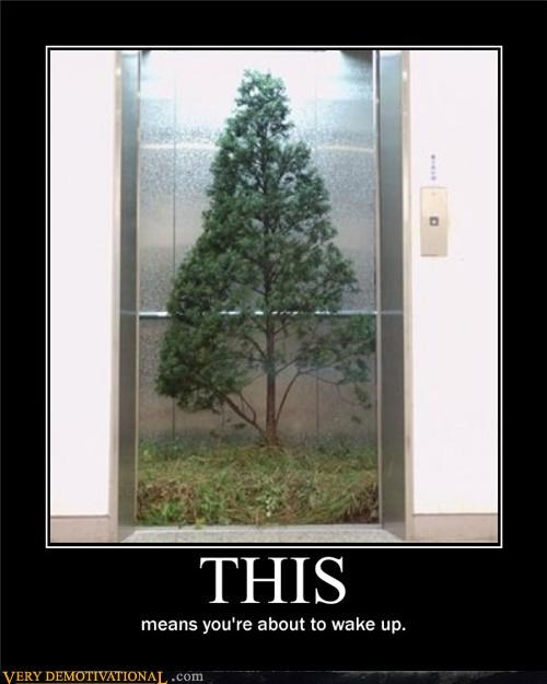 dream,elevator,tree