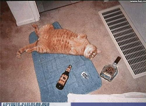 animals bottles cat passed out - 4602678016