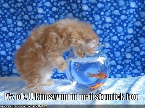 can caption captioned cat do want fish its-okay kitten noms Staring stomach swim tabby - 4602905856