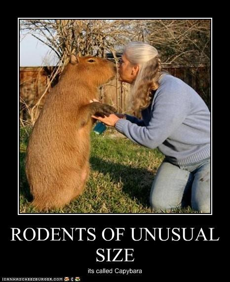 RODENTS OF UNUSUAL SIZE its called Capybara