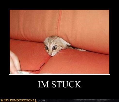 bad idea cat couch stuck