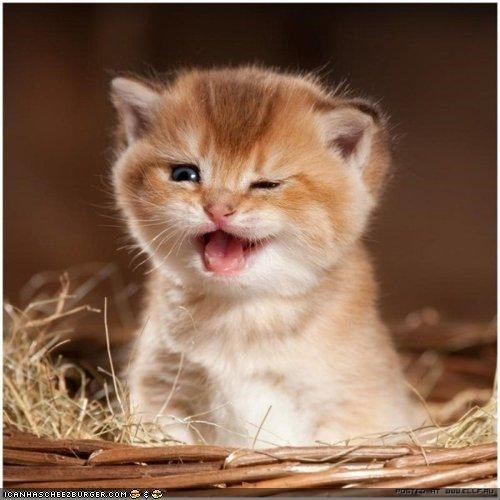 basket,cyoot kitteh of teh day,mouth open,Pirate,wink