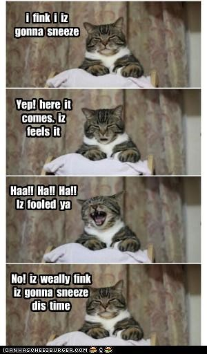 after before caption captioned cat comic do not want joke just kidding panel sequence seriously sneeze sneezing waiting