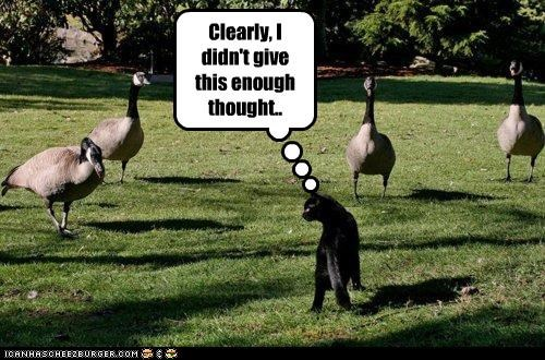 bad idea,caption,captioned,cat,clearly,didnt,enough,geese,give,goose,mistake,thought