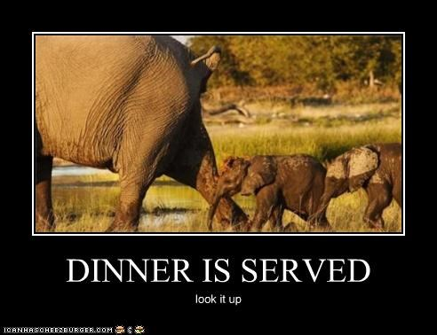 DINNER IS SERVED look it up