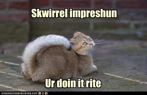 caption,captioned,cat,derp,derpface,doing it right,Hall of Fame,impression,squirrel