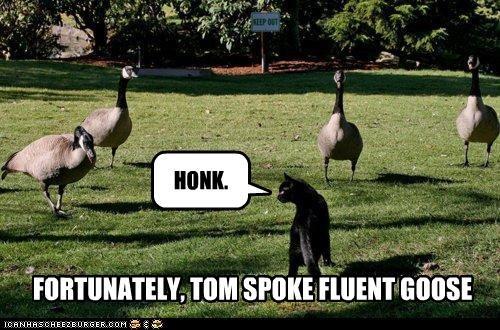 FORTUNATELY, TOM SPOKE FLUENT GOOSE HONK.