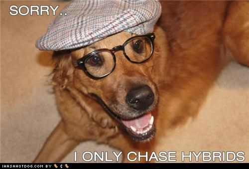 car,cars,chase,chasing,glasses,golden retriever,hat,hipster,hybrid,hybrids,only,pretentious,sorry