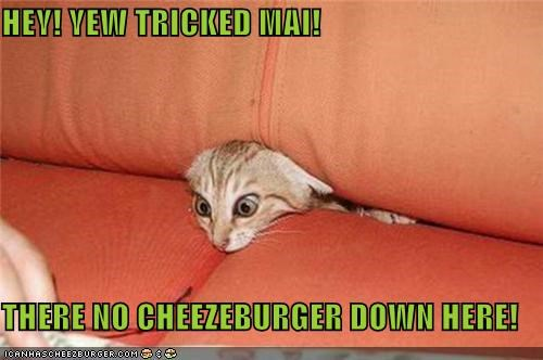 Cheezburger Image 4605480192