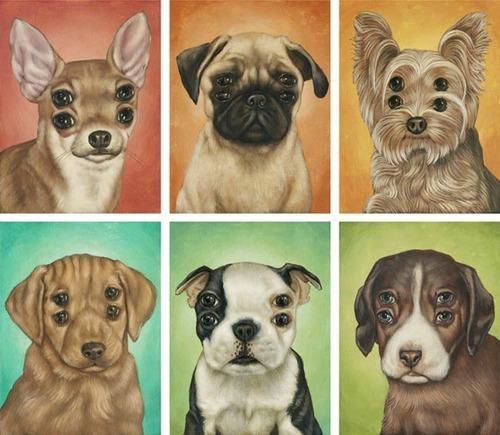 Casey Weldon,puppeh,Puppy Portrait
