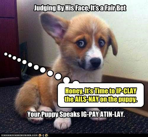 Honey, It's Time to IP-CLAY the AILS-NAY on the puppy. Your Puppy Speaks IG-PAY ATIN-LAY. Judging By His Face, It's a Fair Bet