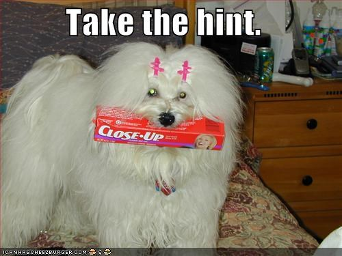 I Has A Hotdog - brush your teeth - Funny Dog Pictures | Dog Memes ...