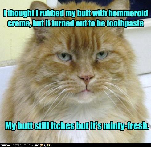 butt,caption,captioned,cat,cream,feeling,fresh,Hall of Fame,hemorroid,itch,minty,mistake,rubbed,thought,toothpaste