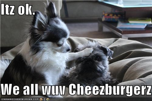 Cheezburger Image 4606195456