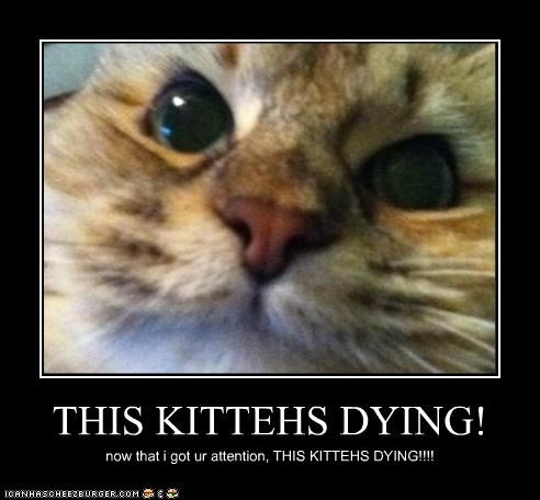 THIS KITTEHS DYING! now that i got ur attention, THIS KITTEHS DYING!!!!