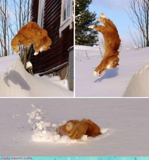 acting like animals cat crash FAIL jumping landing skateboard skateboarding snow sport stick tabby - 4606668800