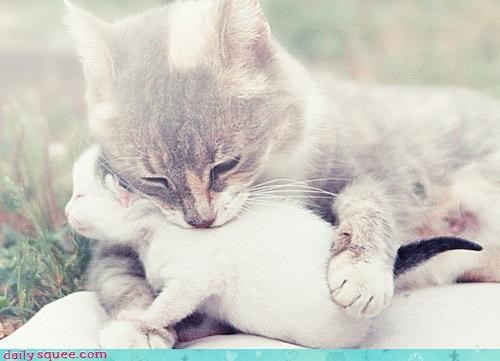 cat Cats cuddling kitten mother nurturing protecting stay - 4606684160