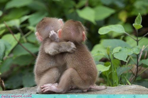 Babies baby breakfast cuddling monkey monkeys waiting - 4606709248