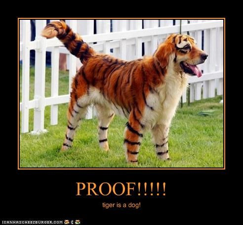 PROOF!!!!! tiger is a dog!