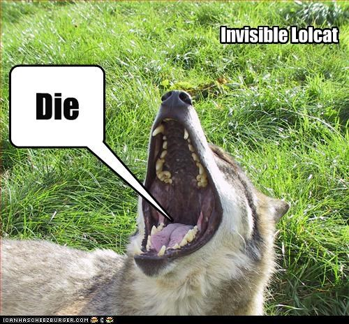 Die Invisible Lolcat