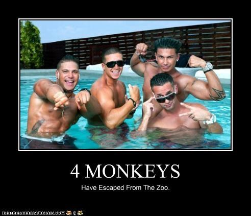 4 MONKEYS Have Escaped From The Zoo.