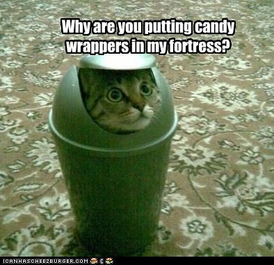 candy caption captioned cat confused do not want fortress Hall of Fame hiding question trashcan wrappers - 4608077824