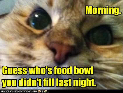 bowl caption captioned cat fill food forgot guess Hall of Fame last night mistake morning who whoops - 4608314880