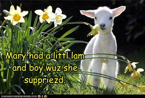 Mary had a littl lam and boy wuz she suppriezd.