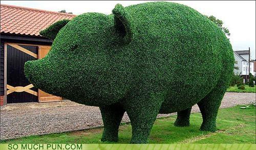 garden hedge hedgehog hog literalism variety - 4608958464