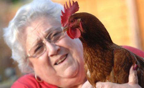 Bertie,Gertie,How About That,Sex Change Chicken
