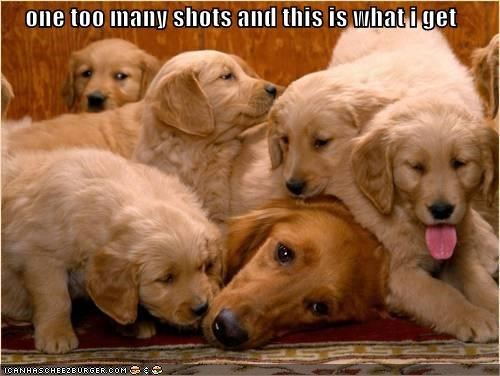 golden retriever,golden retrievers,mistake,one,outcome,problem,puppies,puppy,shots,too many,what you get