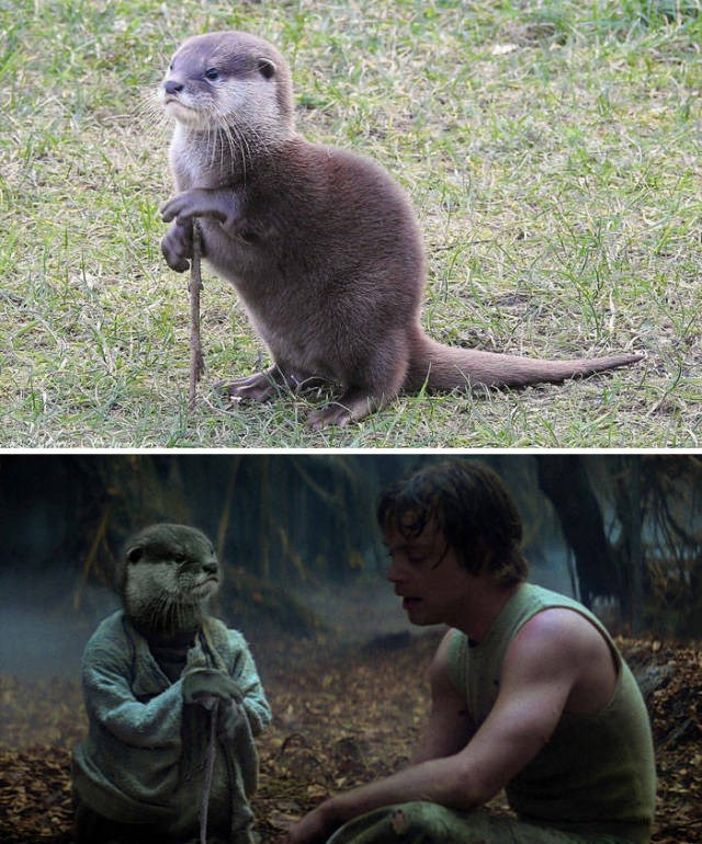 funny animal photoshops, an otter as yoda