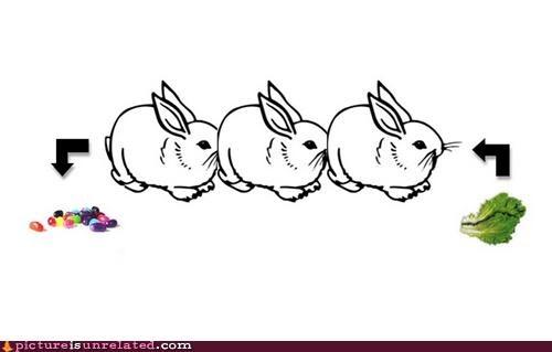 bunnies jelly beans lettuce science - 4609380352