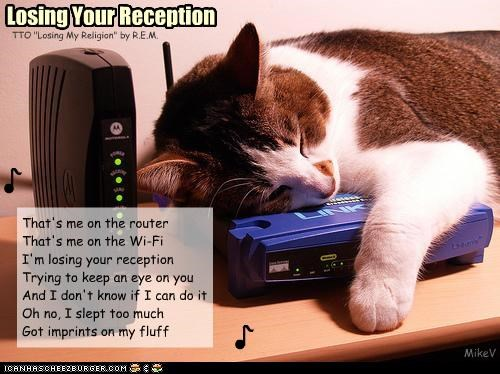 caption,captioned,cat,Hall of Fame,losing my religion,lyrics,parody,r.e.m,reception,router,sleeping