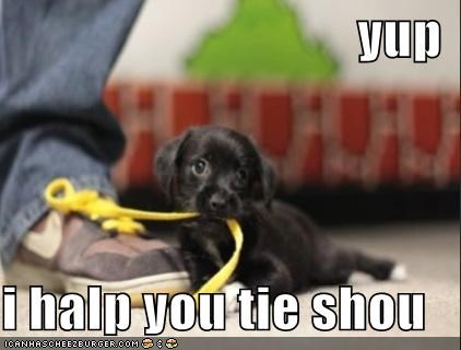 assistance border collie help helping puppy shoe shoelace shoes tie tying yup - 4609586688